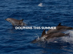 dolphons-this-summer